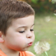 Blowing Daffodil